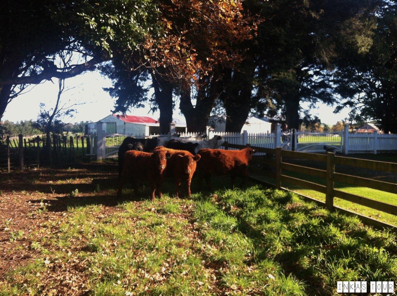 Fielding Livestock market as a Vegetarian