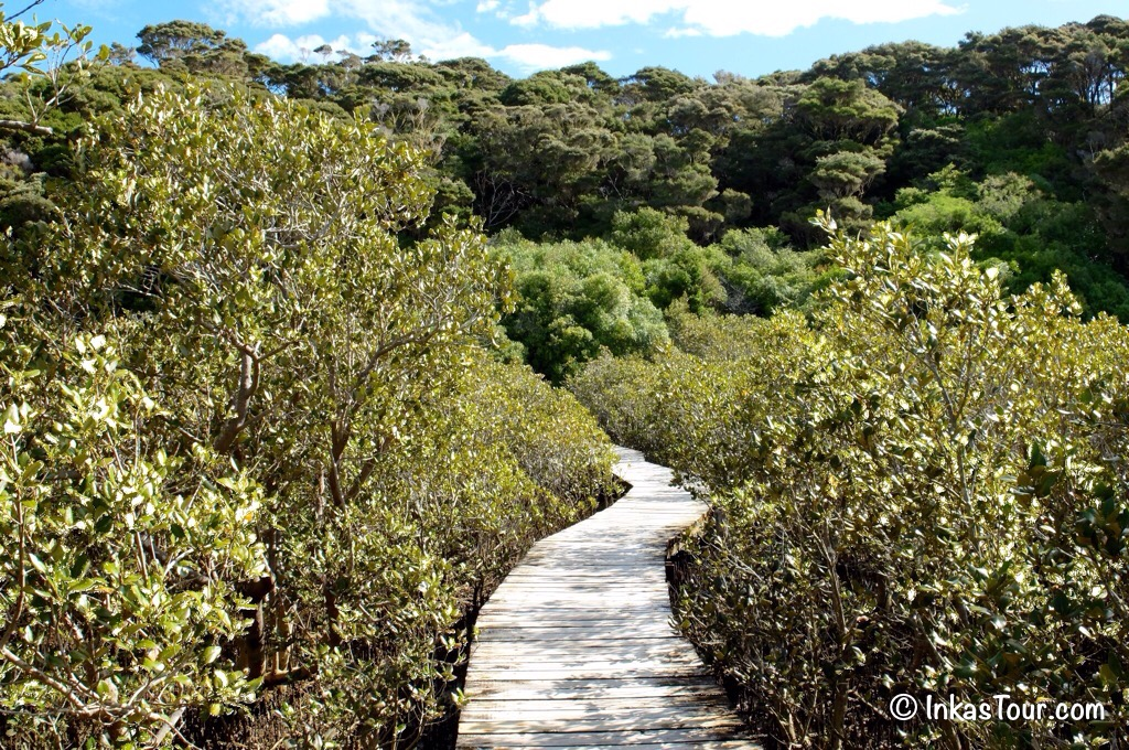 Mangrove Trees,Northland, New Zealand
