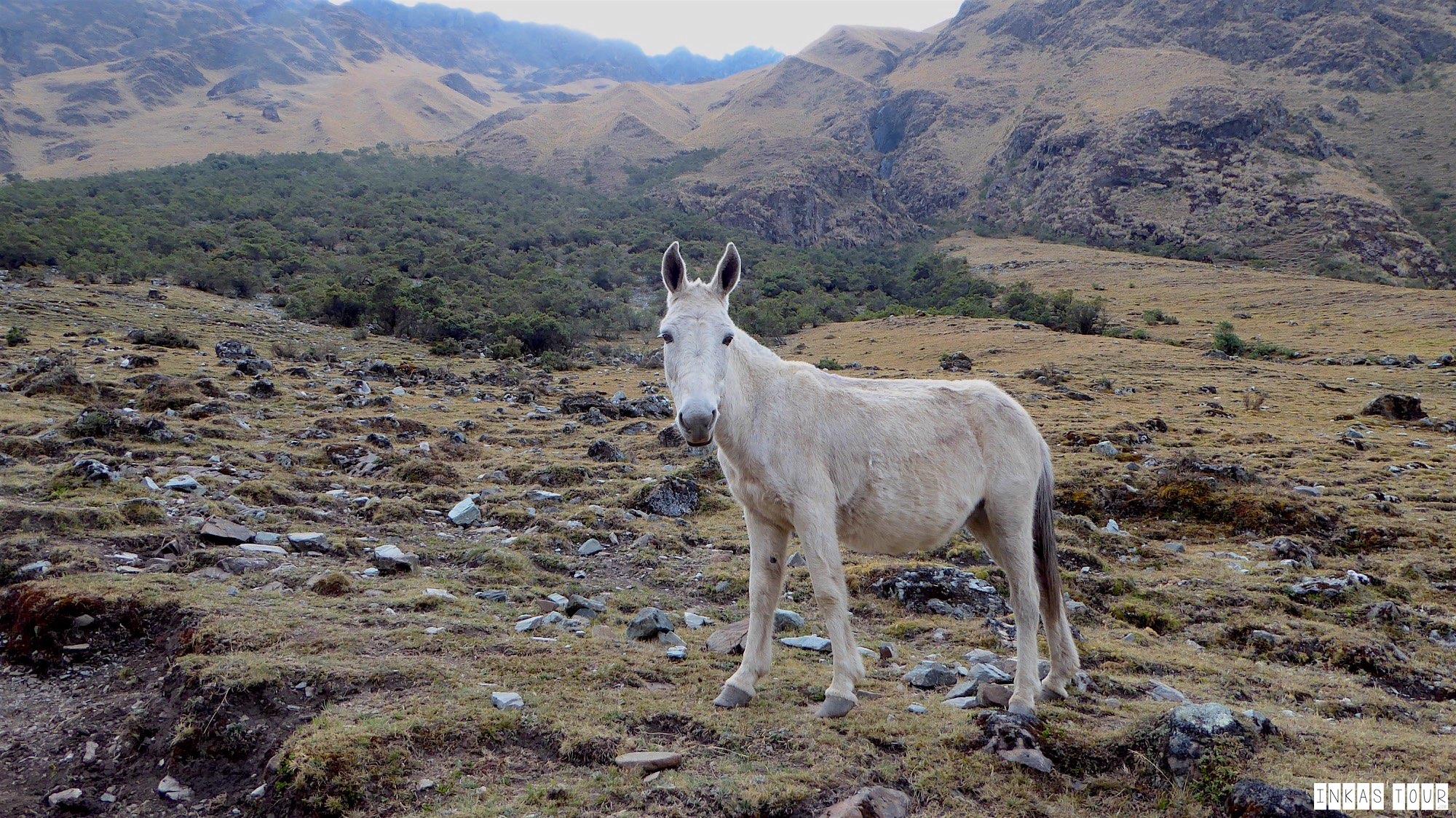 Salkantay Hike Machu Picchu