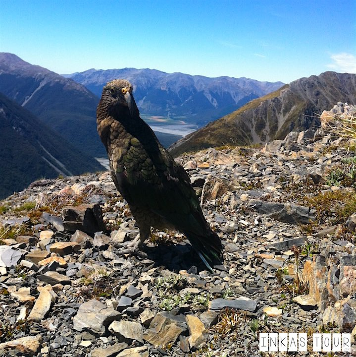 Hiking the Avalanche Peak in Arthurs Pass, New Zealand