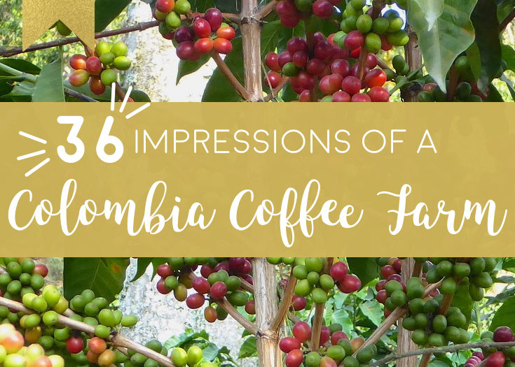 36 Impressions of a Coffee Farm in Colombia