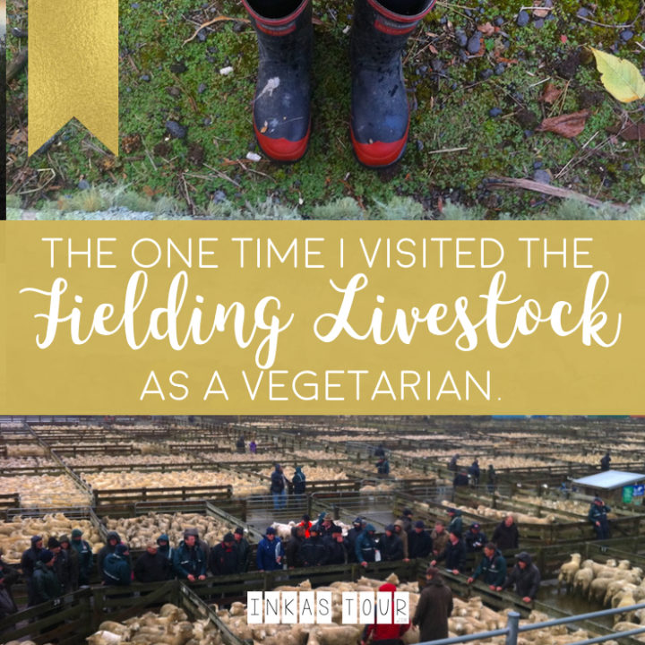 The one time I visited the Fielding Livestock Market as a Vegetarian