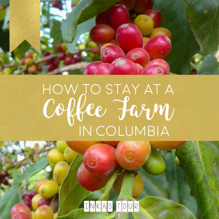 How to stay at a Coffee Farm In Colombia
