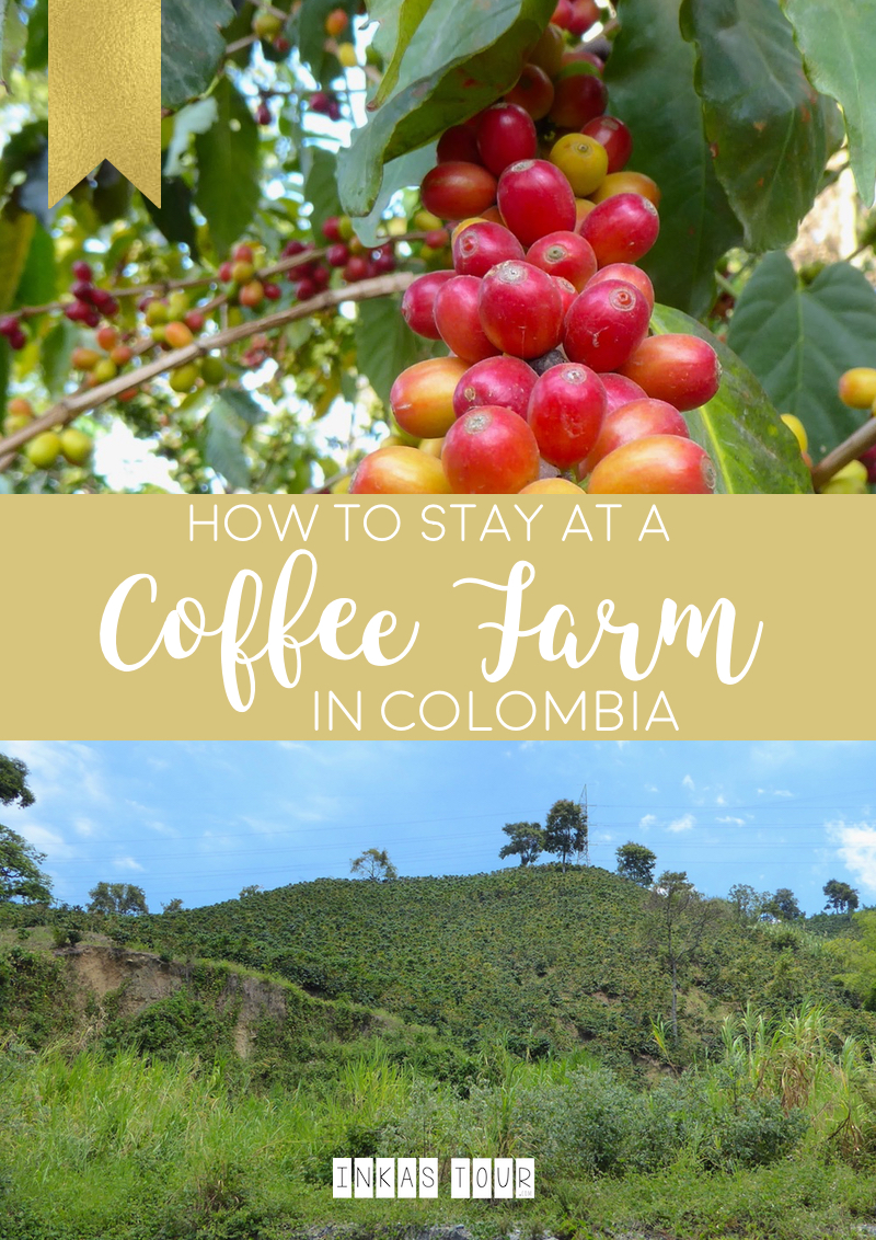 Inkas Tour How to stay at a Coffee Farm in Colombia