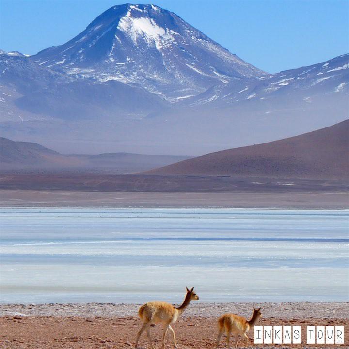 33 Impressions of the Uyuni Salt Flats Tour